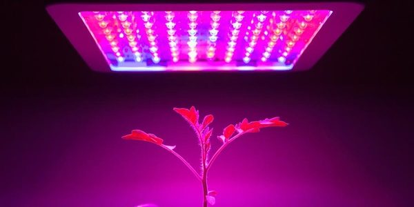 Best-1000-Watt-LED-Grow-light